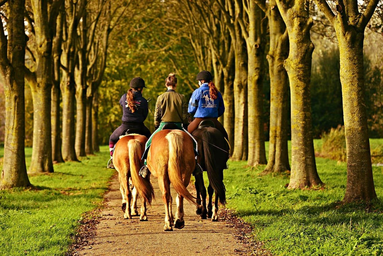 Reiten am Wolfgangsee: drei Reiter auf ihren Pferden im Wald, von hinten betrachtet.