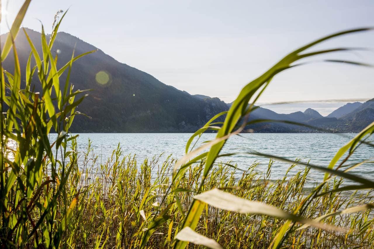 Wolfgangsee: Blick über das Wasser, im Vordergrund Uferschilf, im Hintergrund Berge.